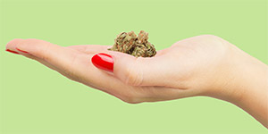 female hand holding weed bud