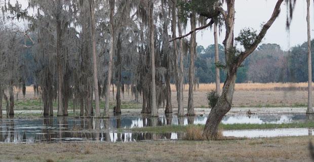 Cypress Pond