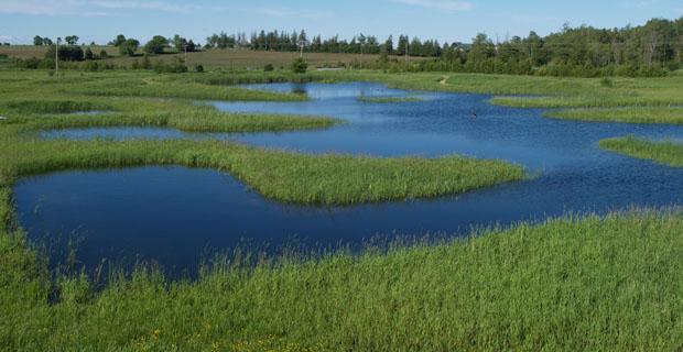 The Home Pond