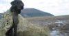 Tule Mud Flats hunt