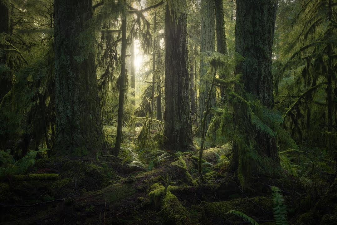 Robert Postma Cathedral Grove
