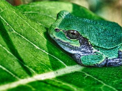 Olympus OM-D E-M1 Sample Image Frog