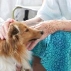 Pet Therapy For Your Aging Loved One