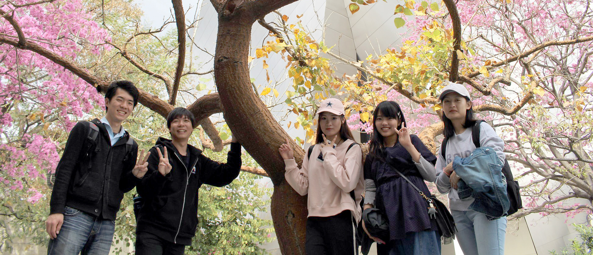 students in front of cherry tree