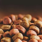 The Truth About Grain-Free Dog Food