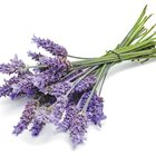 The Health Benefits of Lavender–Not only a fragrance, many relevant modern uses of Lavender have withstood the test of time: Nat