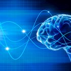 Optimizing the Power of the Brain