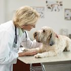 Boost Your Pet's Health With These Preventive Measures