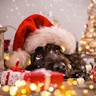 Keep Your Pet Safe and Happy Through the Holidays