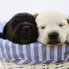 What to Expect When You're Expecting…a Puppy