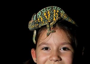 HERPS Waco/Temple Exotic Reptile & Pet Show