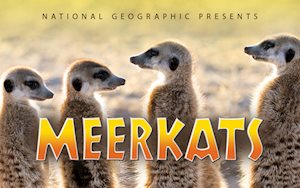 Meerkats Film