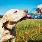 7 Ways to Protect Your Pet From Summer Heat