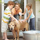 Ways Owning a Pet Can Teach Kids Responsibility