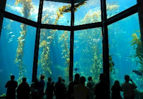 Virtual Guide to Zoos and Aquariums...Visit Your Favorite Animal Anywhere in The World