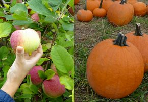 Apple Picking, Pumpkin Picking, Fall Fun at NJ Farms