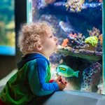 Great Aquariums to See Sea Life