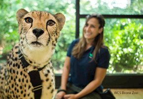 The Bronx Zoo is offering Wildlife Camp Online for Kids this Summer