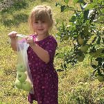 Top 10 Apple Picking Farms in South Jersey