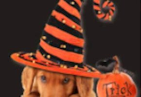 Safe Howl-o-ween Fun At Zoos, Aquariums, & Gardens