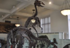 NYC FREE Kid-Friendly Museums