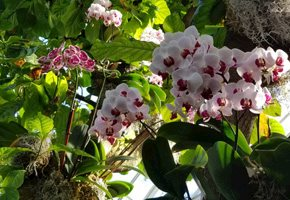 Virtual Springtime Flowers, Orchids and Blooming Gardens in NJ and Beyond