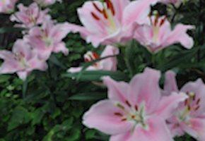 Great Indoor / Outdoor Flower Exhibitions in New Jersey