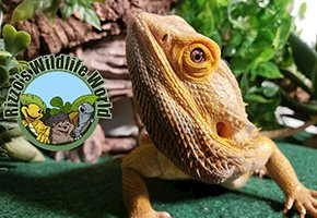 Bring The Wildlife To Your House Or Your Classroom! Have A Virtual Experience With Rizzo's Wildlife