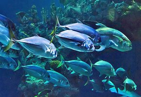 Guide to NJ Area Aquariums and Sea Life