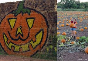 Fall Apple and Pumpkin Picking for Kids at NJ Farms