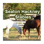 Seaton Hackney Stables - Horse Riding Programs and Camp