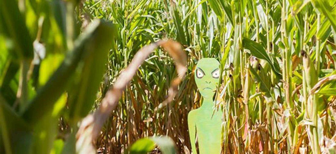 Corn Maze at Snyder Farm