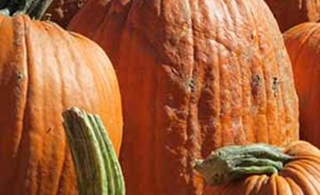 U-Pick Pumpkins & Apples-Van Thun Farm-Washington