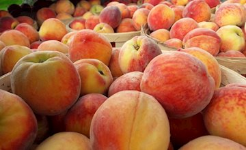 Just Peachy Festival at Terhune Orchards
