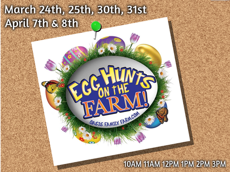 Oasis Farm's Egg Hunt