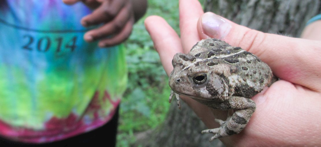 Find some of the strangest stream critters with us!