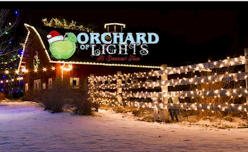 Orchard of Lights at Demarest Farms