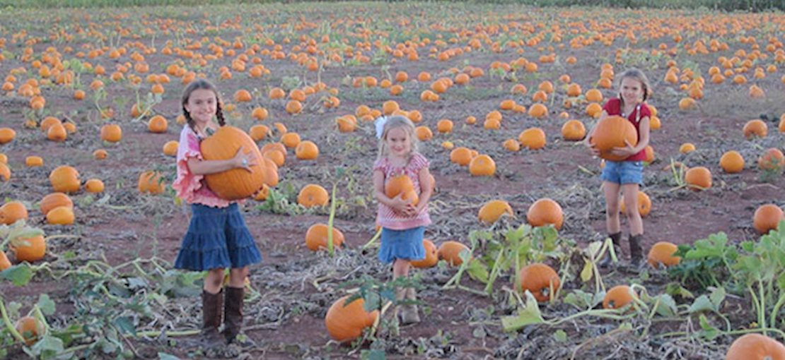 You will definitely want to come back in October for our Annual Snyder's Farm Fall Festival, it is fun for the whole family.