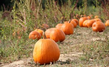 Fall Family Fun Weekends at Terhune Orchards