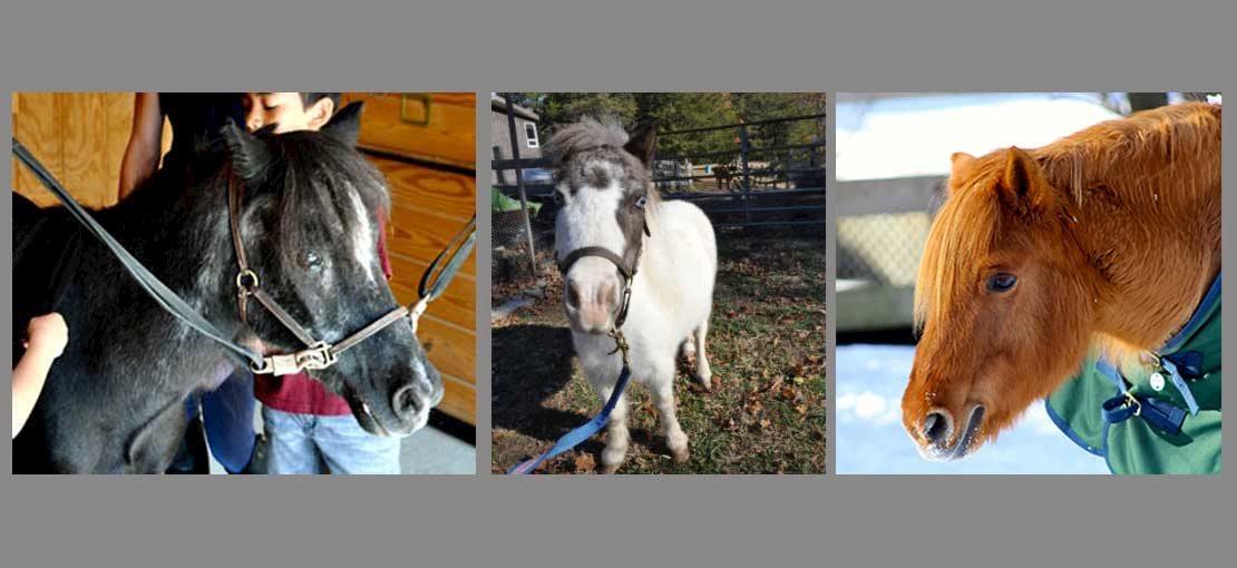 Ponies at Pony Power