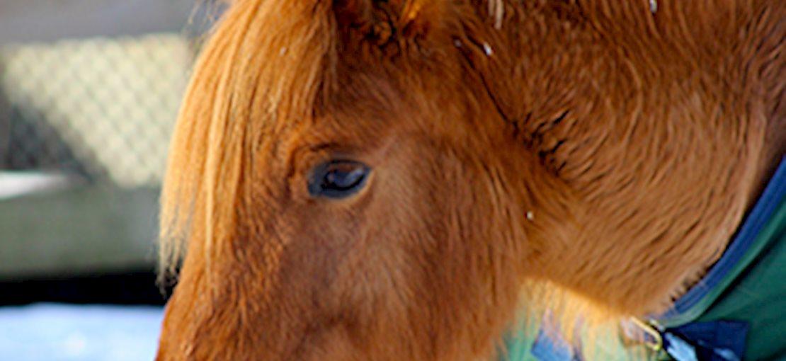 Another pony at Pony Power