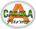 Fall Fest at A. Casola Farms