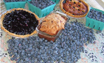 Blueberry Bash at Terhune Orchards