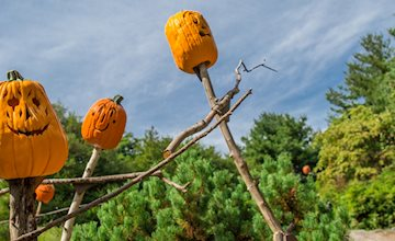 Spooky Pumpkin Garden at New York Botanical Garden