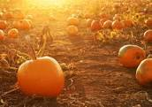 Demarest Pumpkin Picking Food and Movie Night