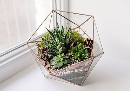 apartment-living-terrarium