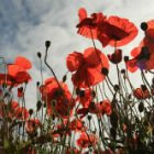 5 Remembrance Day books for kids
