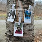 Polaroid photos clipped to a string that's tied to a tree trunk